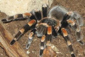 Đốt trụi nhà vì sợ 1 con nhện