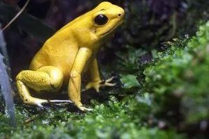 10 loài động vật trông vô hại nhưng cực kỳ nguy hiểm