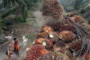 Nguy cơ bùng nổ thương chiến giữa EU và Indonesia