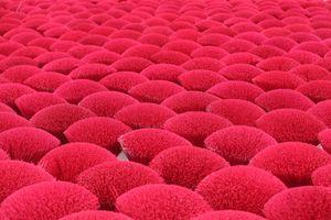 Quảng Phú Cầu - Rực rỡ làng 'hoa đỏ'