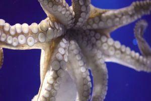 Nhớ đời về lần chụp ảnh tự sướng với bạch tuộc