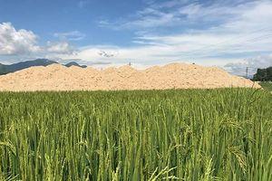 Quảng Ngãi: Lấp lúa của dân làm khu dân cư khi chưa hoàn tất đền bù cho dân
