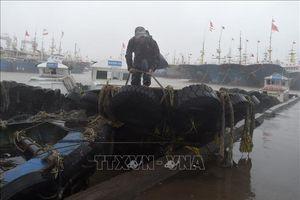 Bão Lekima đổ vào Đông Nam Trung Quốc, hàng trăm nghìn người phải sơ tán