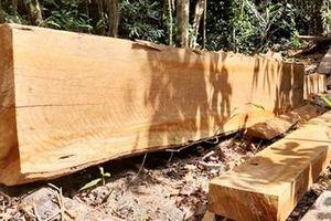 Tàn phá rừng đầu nguồn sông Ví