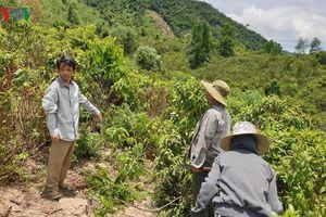 Dân kêu trời vì bị 'giao nhầm' rừng già không thể sản xuất