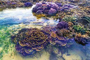 Mê đắm trước vẻ đẹp của 'thiên đường san hô' tại Phú Yên