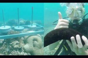 Cựu quán quân 'Cuộc đua kỳ thú' Ngọc Anh tố êkip chương trình phá hoại môi trường biển khi quay hình