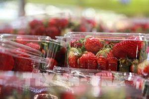 Nông dân trồng dâu tây Australia đang kêu gọi người tiêu dùng ủng hộ