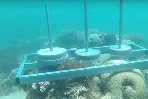 Nhà sản xuất 'Cuộc đua kỳ thú' xin lỗi về hành vi phá hoại rạn san hô