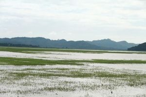 Đắk Lắk: Vỡ đê, gần 1.000 ha lúa của người dân chìm trong biển nước