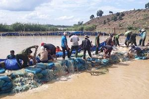 Đắk Lắk: Đã ngăn được nước tràn vào cánh đồng lúa hàng trăm hecta