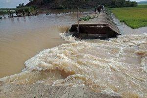 Đắk Lắk: Vỡ đê, 1.000 ha lúa chìm trong biển nước