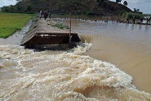 Đắk Lắk: Đê bao Quảng Điền bị vỡ, hàng trăm ha lúa bị nhấn chìm