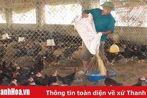 Làm giàu từ liên kết chăn nuôi gà ở huyện Yên Định