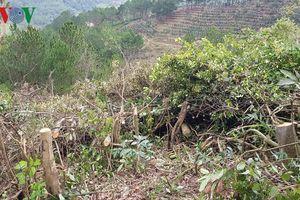 11 đối tượng được thuê chặt phá rừng với giá 10 triệu đồng