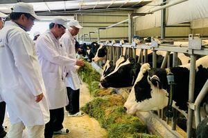 Xây dựng vùng chăn nuôi bò sữa an toàn