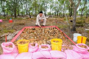 Phát hiện hai hầm chứa hơn 1.400 đầu đạn, kíp nổ tại Quảng Trị