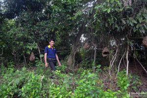 Ông nông dân người Thái liều lĩnh sống cùng 200 tổ ong 'hung thần'