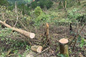 Lâm Đồng: Bắt quả tang 11 đối tượng cưa hạ rừng trái phép