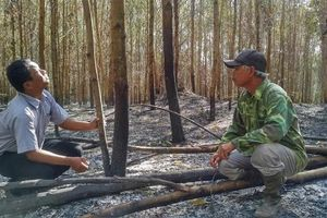 Cần điều tra vụ phá hoại cây trồng của người dân tại huyện Sông Hình, Phú Yên