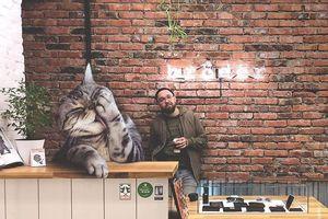 Lạ lùng mèo khổng lồ cao 3m sống chung con người
