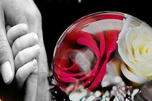 Ai là người đưa 'Bông hồng cài áo' vào lễ Vu Lan ở VN?