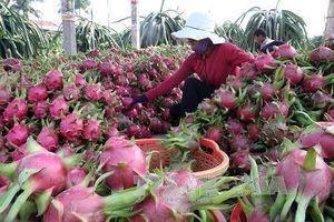 Vì sao hàng trăm xe thanh long Việt Nam ùn ứ ở cửa khẩu?