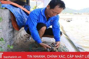 Không phát hiện dư lượng độc hại trong mẫu sản phẩm thủy sản ở Hà Tĩnh