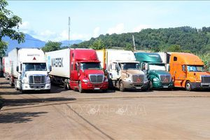 Đã thông quan 50% số xe chở thanh long tại cửa khẩu quốc tế Lào Cai