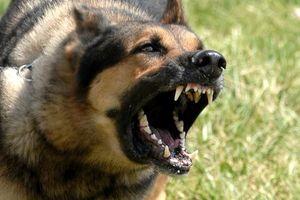 Kinh hoàng những vụ trẻ em bị chó nhà tấn công, thương tích nặng nề