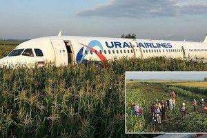 Clip: Khoảnh khắc đàn chim lao vào động cơ làm máy bay Nga chở 233 người tiếp đất bằng bụng