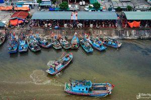 Hình ảnh cảng cá với hải sản 'tươi rói' khiến ai nhìn cũng muốn đến