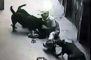 Chó dữ tấn công làm 9 người bị thương