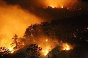 Khởi tố đối tượng gây ra vụ cháy 150ha rừng trồng tại Phú Yên