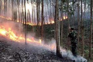 Xử lý hình sự đối tượng gây cháy gần 150ha rừng