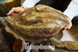 'Bom núi lửa' tìm thấy trên Tây Nguyên thực chất là gì?