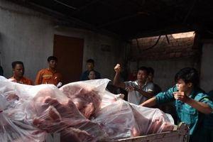 2 container thịt lợn tại cơ sở làm giò chả nhiễm dịch tả châu Phi