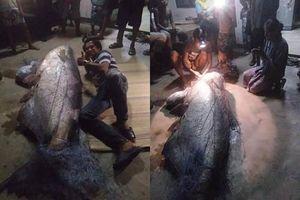 Cá 'thành tinh' trăm tuổi bị bắt giết, dân làng hãi hùng 'thần sông'...