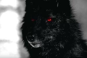 Thực hư chó quỷ xuất hiện khiến con người 'sợ vãi linh hồn'