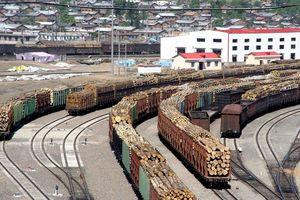 Nội bộ chính phủ Nga bất đồng trong việc xuất khẩu gỗ cho Trung Quốc