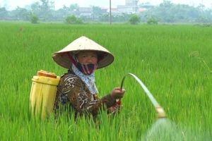 Hà Nam: Tập trung chỉ đạo phòng trừ sâu bệnh hại lúa vụ mùa