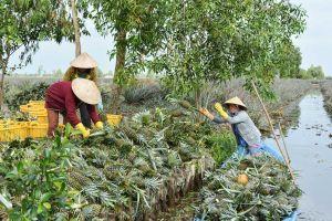 Bài 5: Nghị quyết 120 'chốt' quyết sách đưa Đồng bằng sông Cửu Long phát triển bền vững