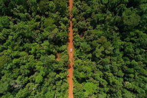 Rừng Amazon hùng vĩ trước trận cháy kỷ lục