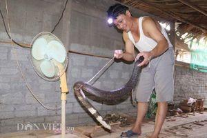 Rùng mình vào nhà người đàn ông nuôi hơn 1.000 con 'mãng xà' cực độc ở Lào Cai