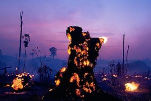 Hình ảnh tang thương về cháy rừng ở Amazon