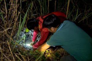 Kiếm vài trăm nghìn mỗi đêm nhờ săn chuột ở Đồng bằng sông Cửu Long
