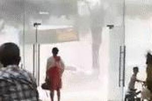 Dông gió quật ngã người dân ở Hà Nội