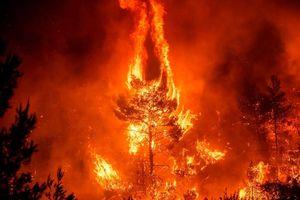 Hình ảnh các vụ cháy rừng lớn trên thế giới trong thời gian gần đây