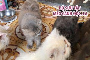 Chiêm ngưỡng hơn 20 con mèo quý ngoại nhập ở Cần Thơ