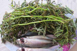Đậm đà cá nục rau nhút
